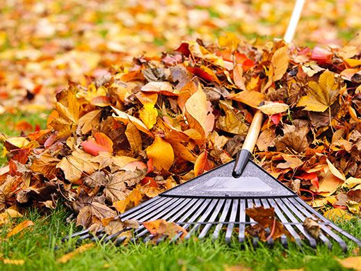 Rake Fall Leaves
